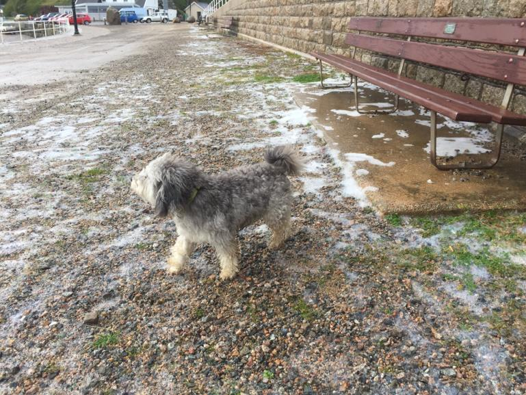 Image of dog in foamstream 2