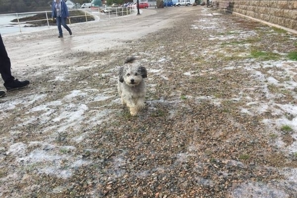 Image of dog playing foamstream